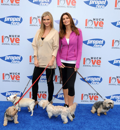 Step and Repeat Backdrop San Diego. Pet Adoption